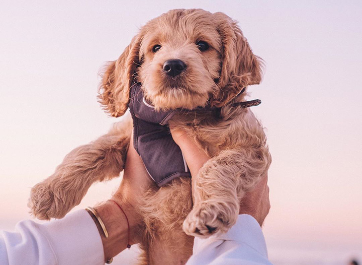 Getting Certified to Fly With Your Emotional Support Animal • The Blonde Abroad