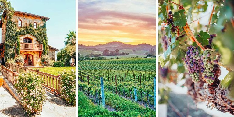 The 36 Best Wineries in Napa (by a Sommelier)